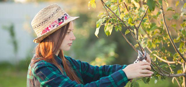 Apfelbaum Schneiden Der Richtige Baumschnitt In Fruhjahr Und Herbst