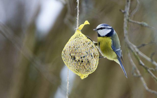 Garten: Vögel füttern