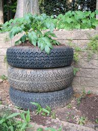 Ein Kartoffelturm aus alten Reifen ist ein Blickfang im Garten.