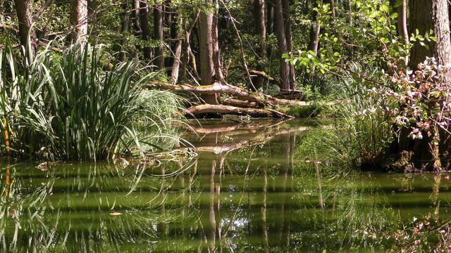 Der Amazonas-Regenwald ist von der Abholzung bedroht.