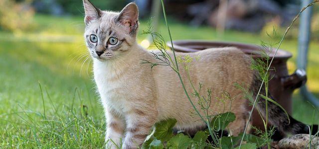 Katze Vertreiben Mit Diesen Sanften Methoden Wird Dein Garten