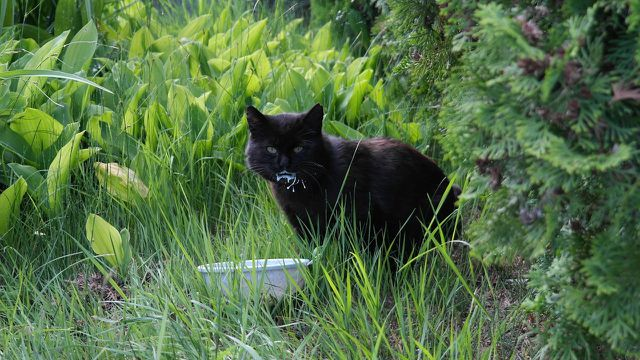Katzen ernähren sich auch in freier Wildbahn nicht ausschließlich von Fleisch.