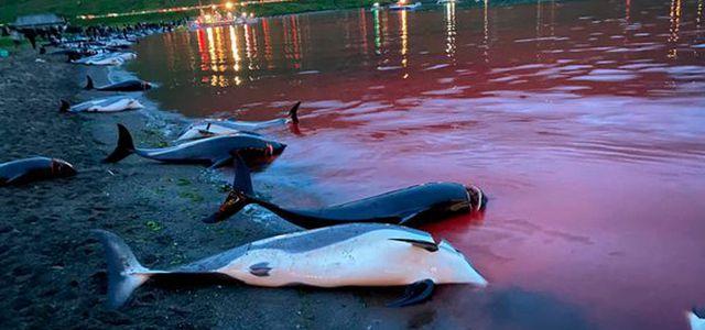 Jagd auf Delfine
