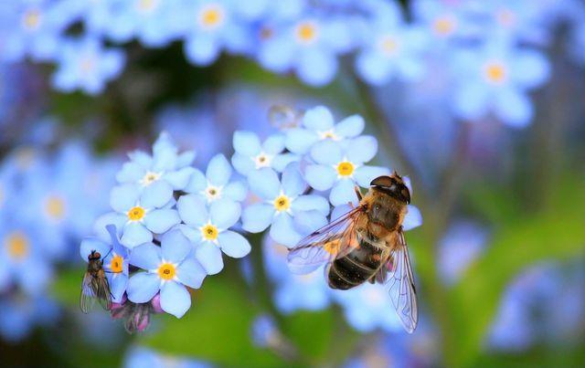Pflanze am besten bienenfreundliche Blumen.