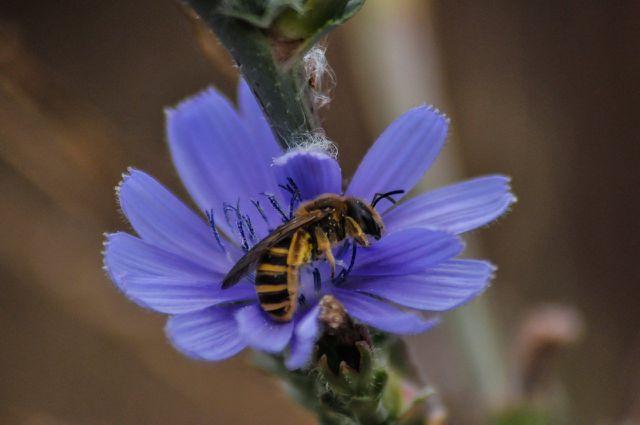 Wichtig für Bienen: Ungefüllte Blüten.