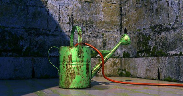 Die Verpiss-dich-Pflanze mag es mäßig feucht: Du musst sie nur gelegentlich gießen.