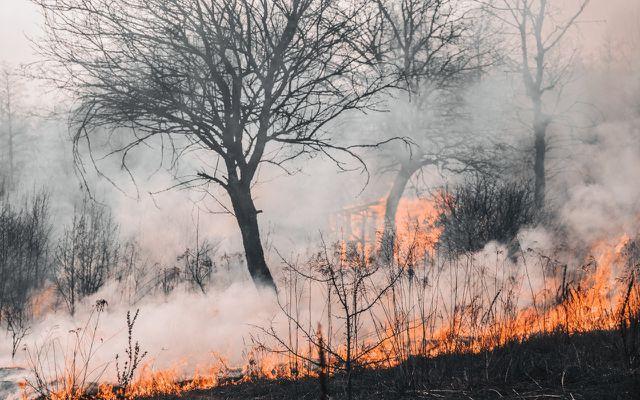 Durch Menschen verursachte Waldbrände kann man verhindern.