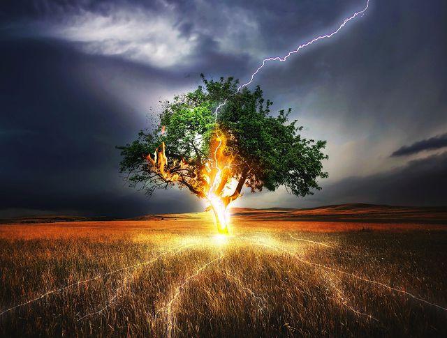 Wie sicher bist du bei Gewitter unter einem Baum?