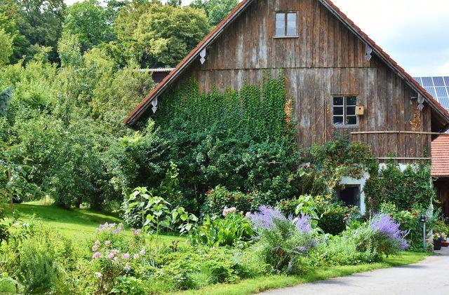 Hornspäne verwenden  Bio-Bauern im Gemüsegarten