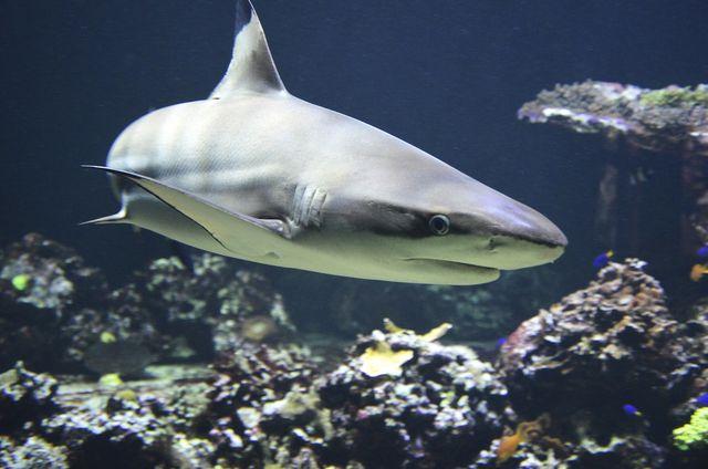 Sharkproject setzt sich für den Schutz hunderter Haiarten ein.