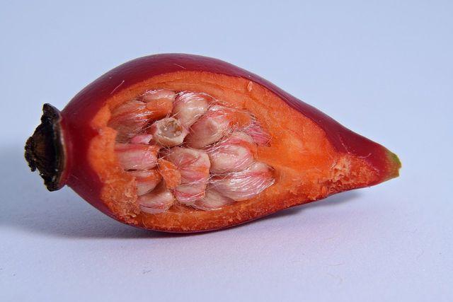 Hagebuttenöl wird aus den roten Hagebuttenfrüchten gewonnen.