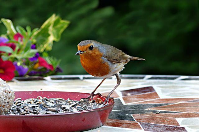 Vogelfütterungen ziehen vor allem stabile Populationen an