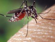 Gegen nervige Mücken helfen viele Pflanzensorten