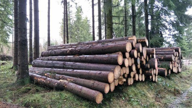 Nachhaltige Forstwirtschaft: ein komplexes Thema