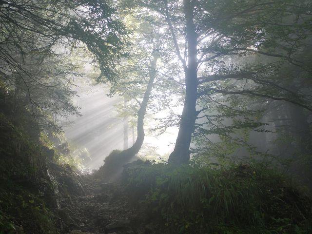 Naturnahe Mischwälder sind robuster als künstlich angelegte Monokulturen.