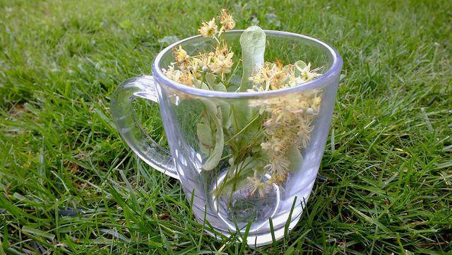 Lindenblütentee ist ein altes Hausmittel gegen Erkältung.