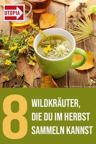 8 Wildkräuter, die du im Herbst sammeln kannst