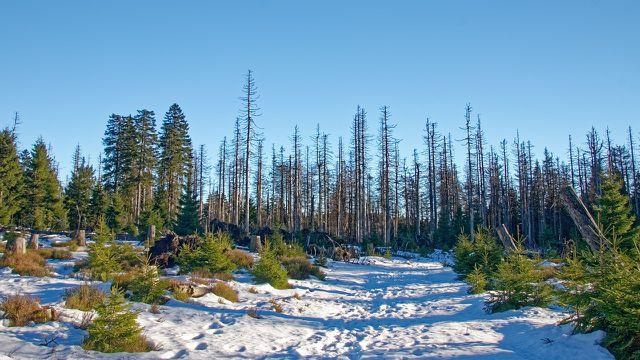 Viele deutsche Wälder sind durch Stürme und Schädlinge nachhaltig beschädigt worden. Eine Aufforstung ist dringend notwendig, jedoch nicht einfach umzusetzen.