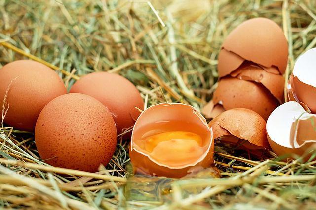 Bio-Eier sind kein Etikettenschwindel