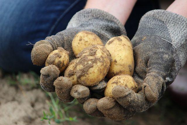 In diesem Video siehst du, wie die Prinzipien der ökologischen Landwirtschaft umgesetzt werden.