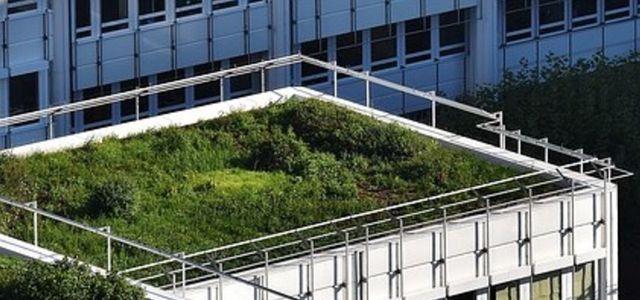 Dachbegrunung Mit Diesem Pflanzen Wird Dein Dach Grun Utopia De