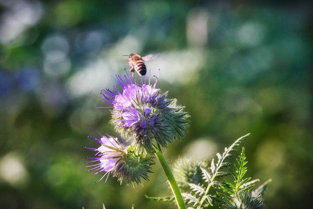Vorgarten bepflanzen: Mit diesen Pflanzen wird er bienenfreundlich ...