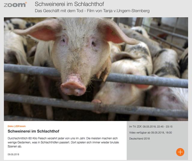 """Doku """"Schweinerei im Schlachthof"""" in der ZDF-Mediathek."""