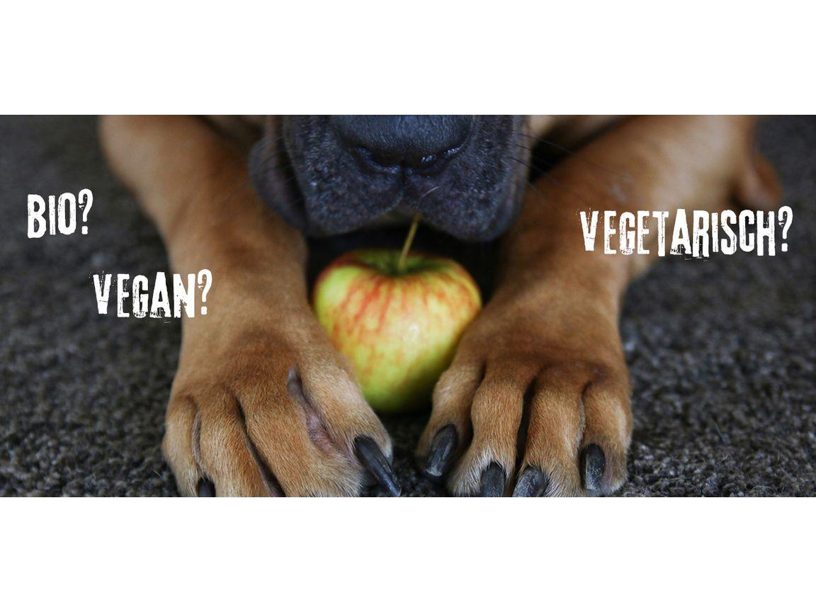 Besseres Tierfutter Bio, vegan oder selbstgemacht   Utopia.de