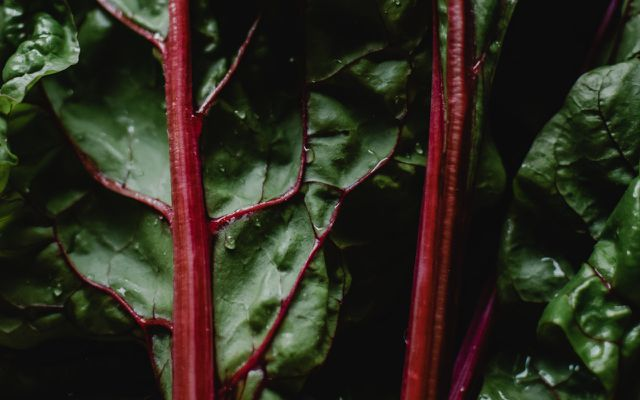are rhubarb leaves poisonous