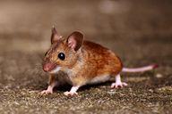 Dichte zuerst Löcher und Ritzen in den Wänden ab, um effektiv Mäuse vertreiben zu können.
