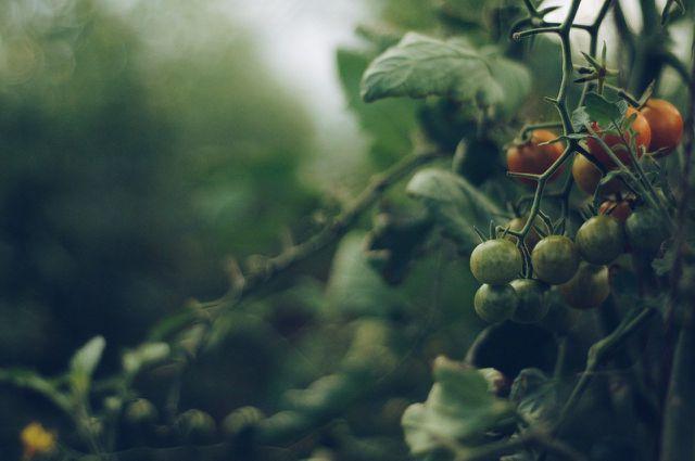 Achte beim Einkauf der Tomatenreis-Zutaten auf Bio-Qualität!