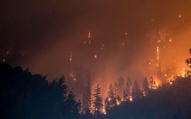 Waldbrand – Zerstörung