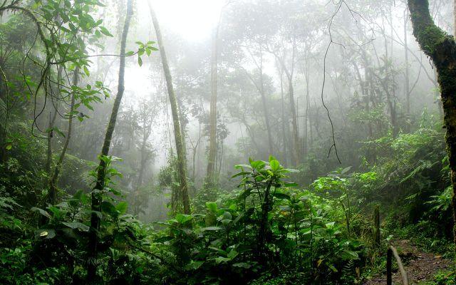 ecosystem of rainforest