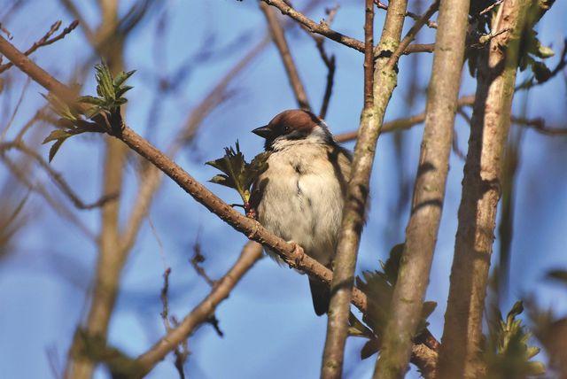 Der Zierapfel ist mit seinen Blüten und Früchten ein wichtiger Nahrungslieferant für heimische Vögel und Insekten.
