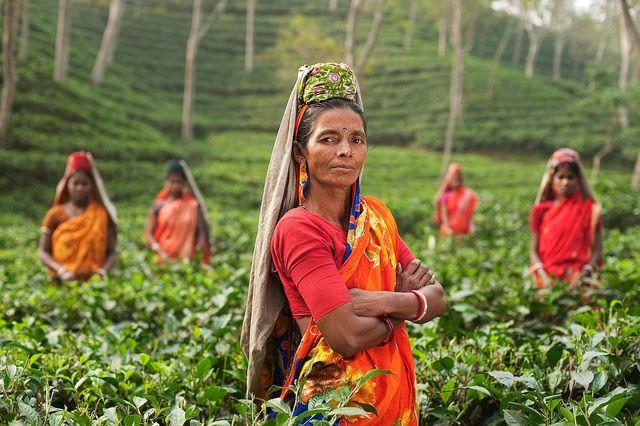 Indem du fair zertifizierten Tee kaufst, unterstützt du nur Teeplantagen, die ihre Arbeiter gerecht bezahlen.