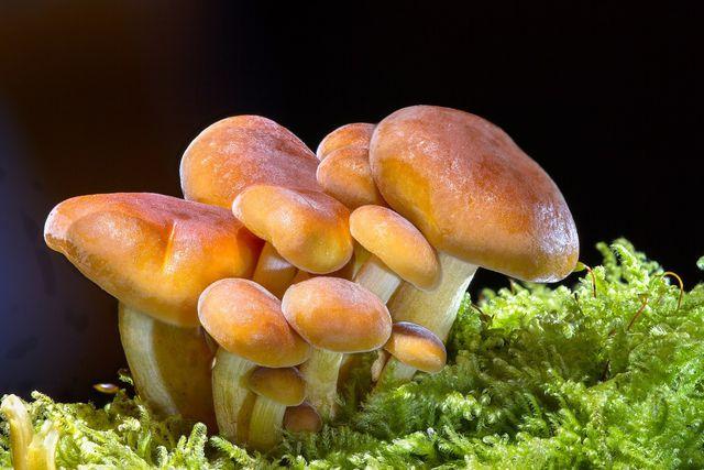 Viele Pilze kannst du auch in unserem heimischen Wäldern selbst sammeln.