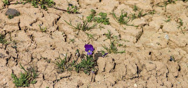 Herrscht in Deutschland bald Wasserkanppheit oder Wassermangel?