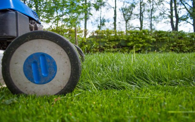 how to kill moss lawn