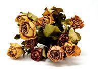 Am einfachsten kannst du Rosen an der Luft trocknen.
