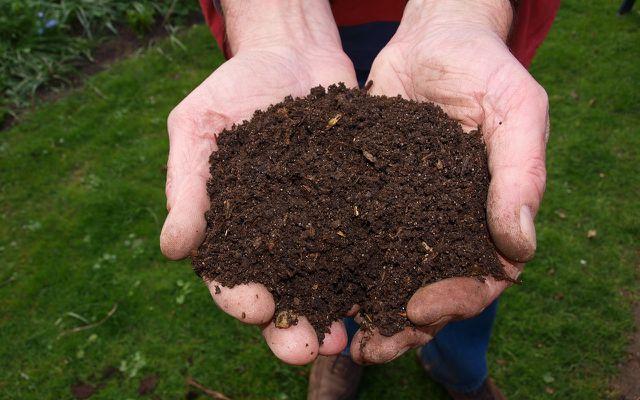 Die Erde am Standort kann mit Kompost angereichert werden
