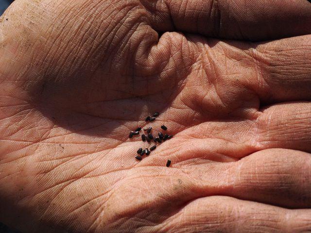 Am besten vermischst du das Saatgut mit etwas Sand.