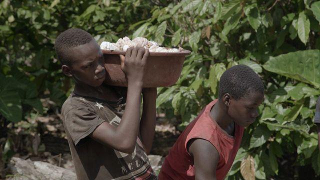 """""""Kakao – ein schmutziges Geschäft"""" ist bei 3sat zu sehen."""