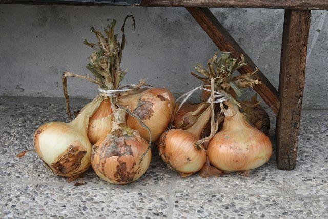 Zum Trocknen kannst du die Zwiebeln zusammenbinden.