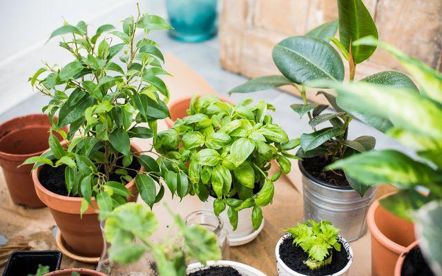 Achte auf torffreie Erde, wenn du Pflanzen deines Urban Junglese umtopfst.