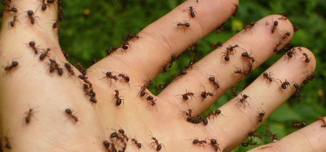 Ameisen Bekampfen Naturliche Hausmittel Fur Garten Und Wohnung