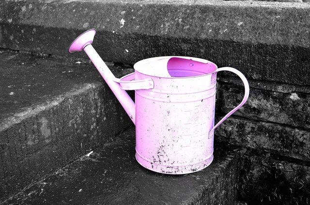 Pflegeleicht: Deinen Flieder musst du nur in sehr trockenen Zeiten gießen.