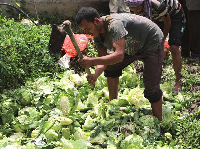 Konventionelles Gemüse und Obst nach Sikkim einzuführen ist verboten.