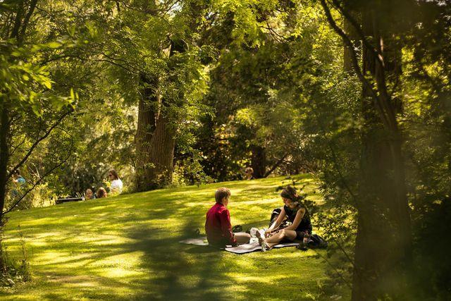 Picknick auf Rasen
