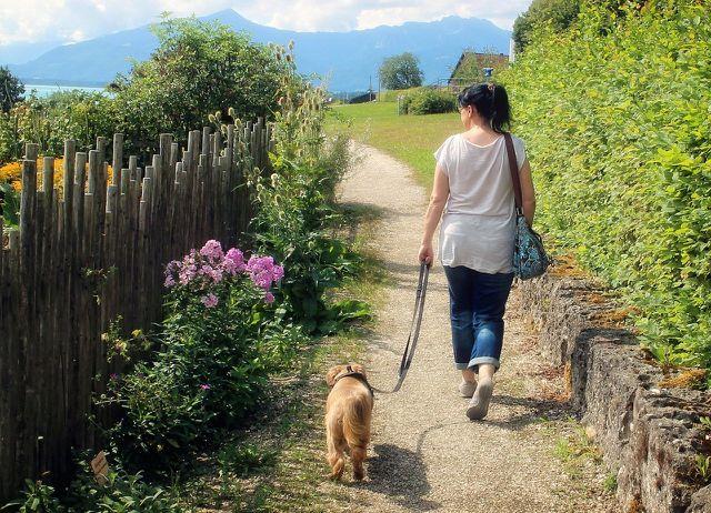 EIn erster gemeinsamer Spaziergang erleichtert das Kennenlernen.