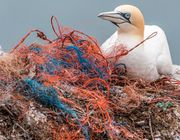 Umweltschutz Plastik